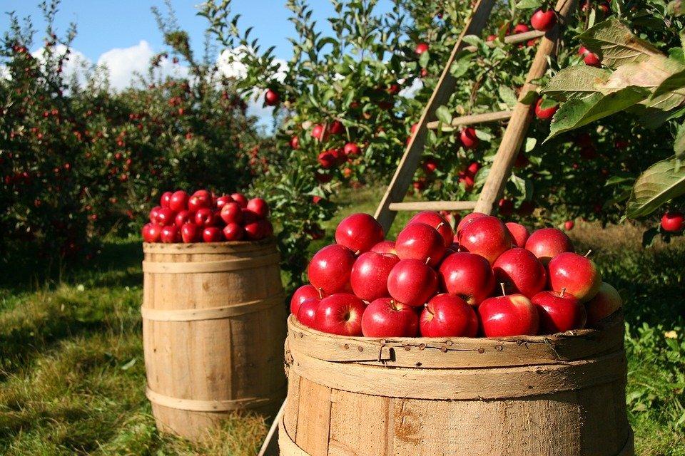 Grantly - Digitalne inovacije v kmetijskoživilski industriji