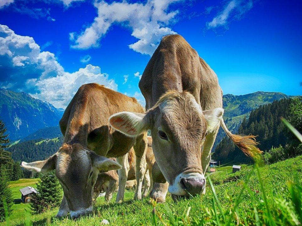 Grantly - Izvedbo ukrepov v kmetijstvu in na podeželju v Novi Gorici