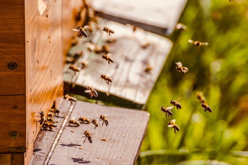 Grantly - Vzpostavitev čebelnjakov za prenos znanja v čebelarstvu