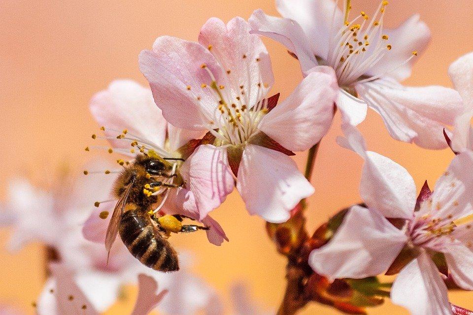Grantly - Didaktični pripomočki za čebelarje