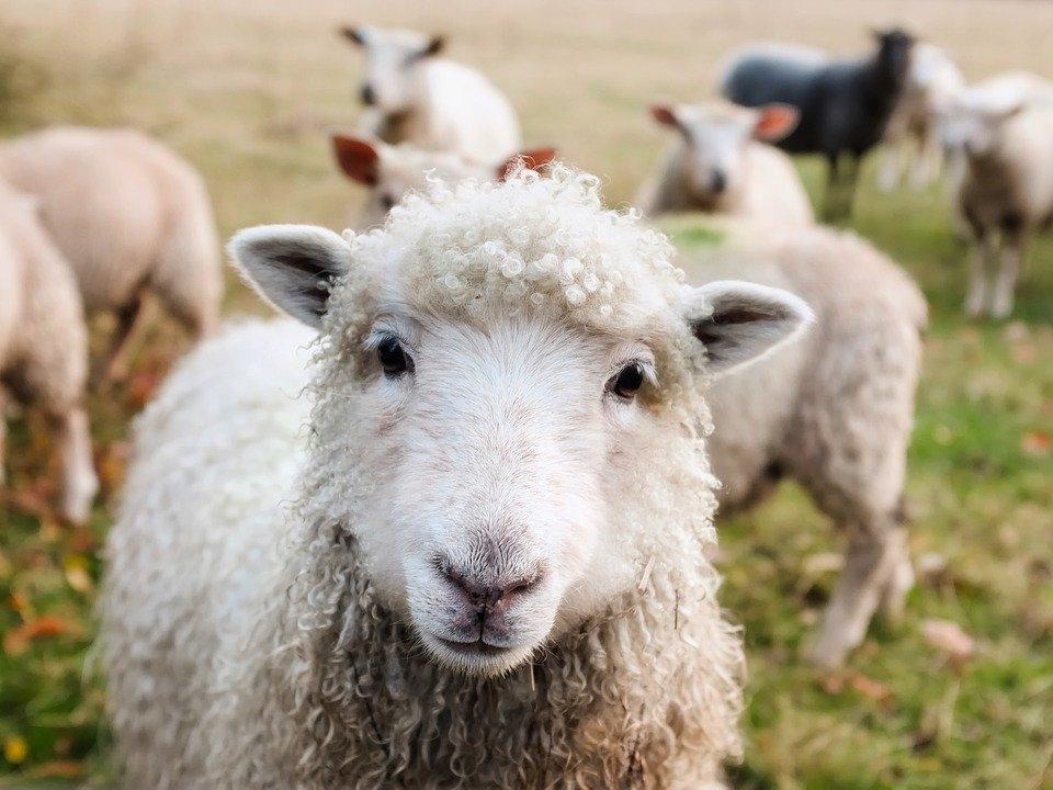 Grantly - Ohranjanje in razvoj kmetijstva ter podeželja v Medvodah
