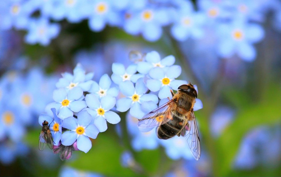 Grantly - Podpora čebelarskim društvom za izvajanje pašnih redov
