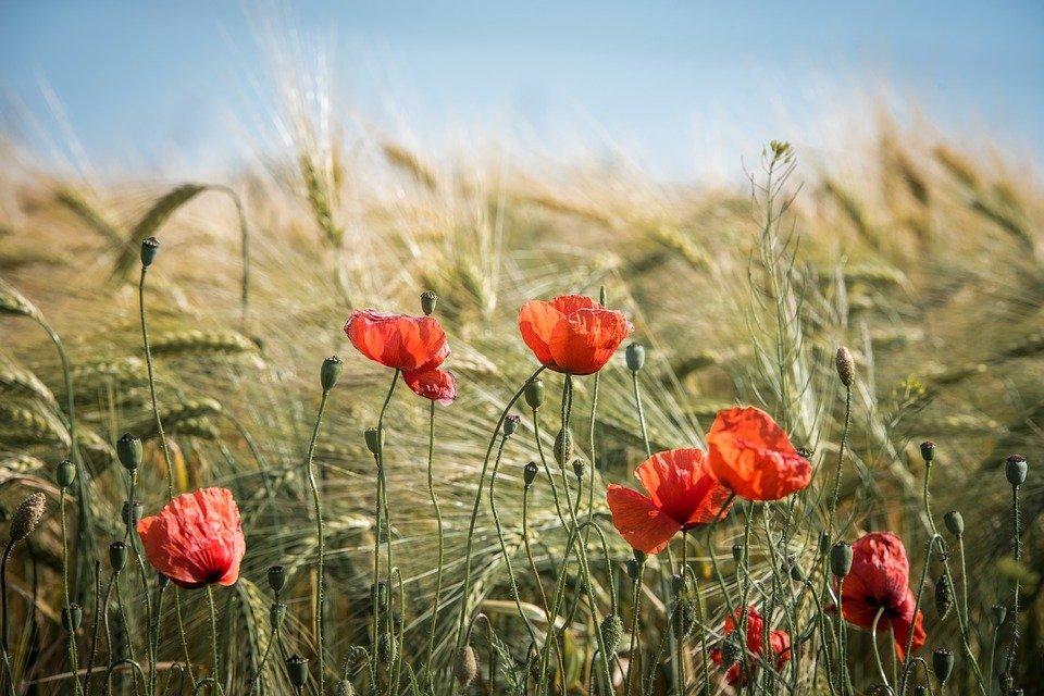Pospeševanje razvoja kmetijstva