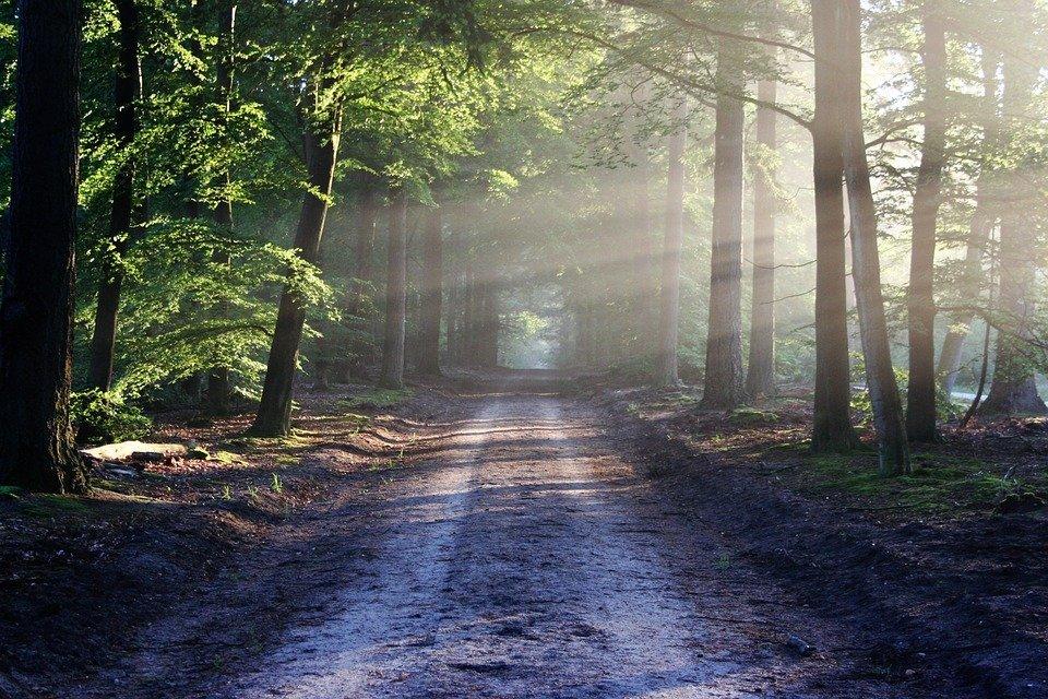 Grantly - Prispevek gospodarjenja z gozdovi k podnebnim ukrepom