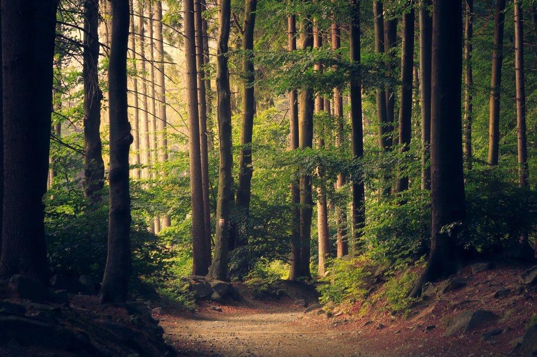 Grantly - Sanacija in rekonstrukcija za gozdove