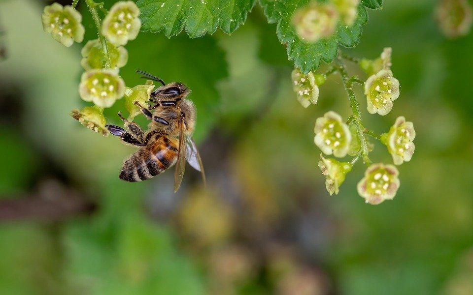 Grantly - Sofinanciranje zdravil v ekološkem čebelarstvu za zatiranje varoje