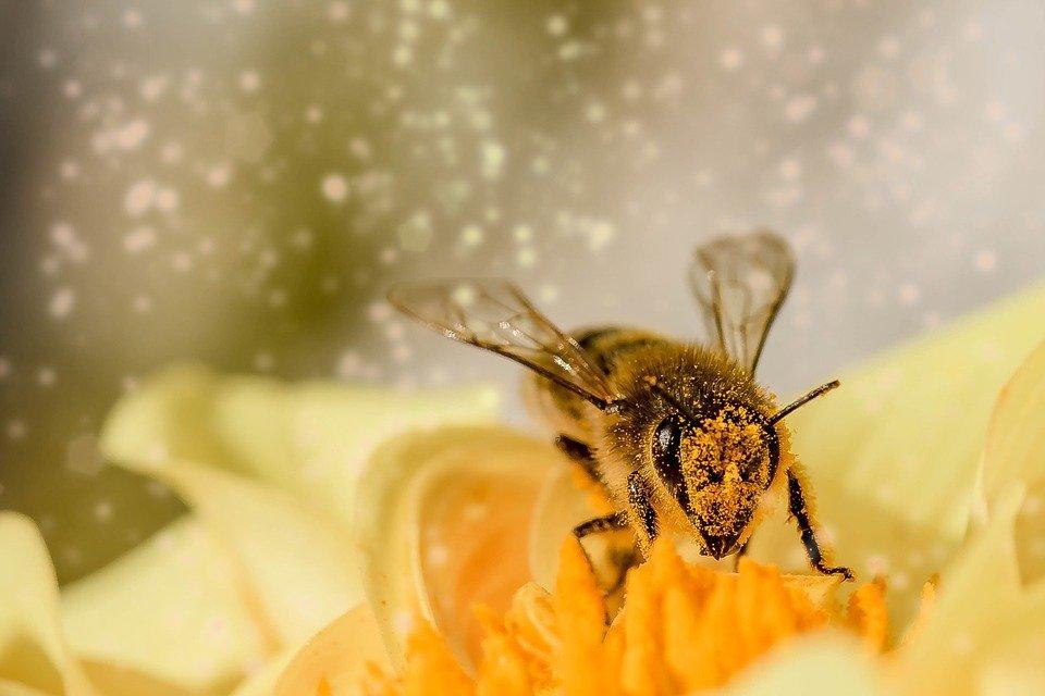 Grantly - Vzreja čebeljih matic