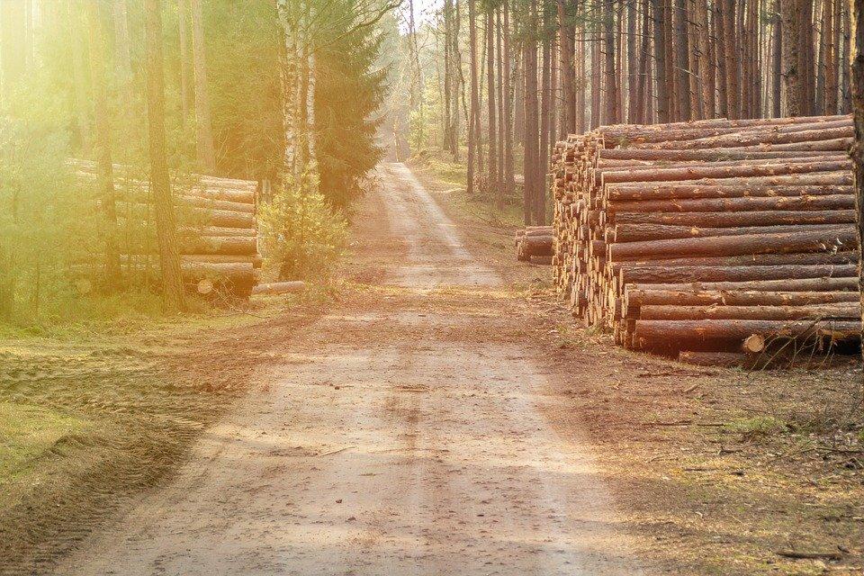 Grantly - Agrogozdarstvo za doseganje podnebnih ciljev