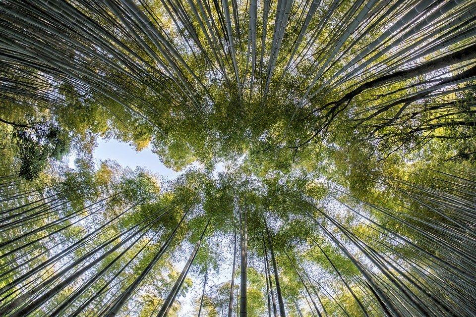 Grantly - Mednarodno sodelovanje med EU in Kitajsko za povečanje vzdržljivosti gozdov