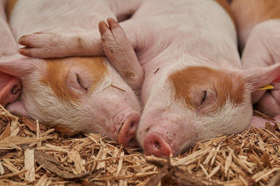 Grantly - Odporni živinorejski sistemi