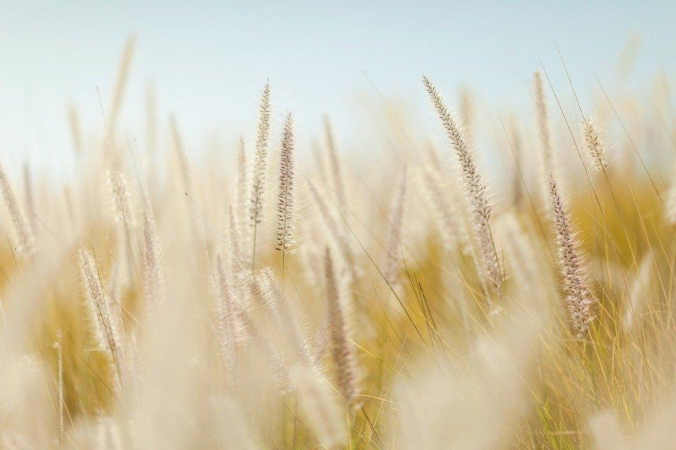 Grantly - Prehranska varnost in trajnostno kmetijstvo