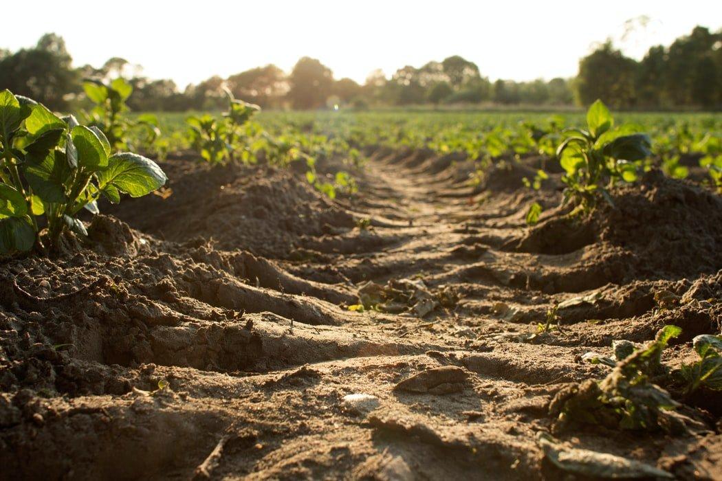 Grantly - Priprava tal za zdravo prst