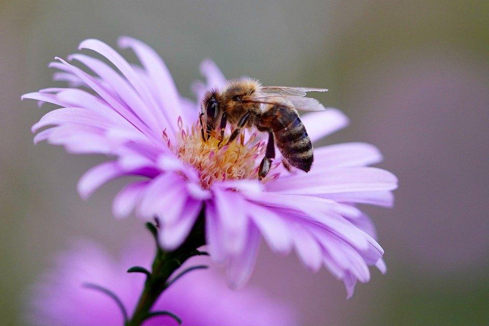 Grantly - Sofinanciranje čebelarske opreme