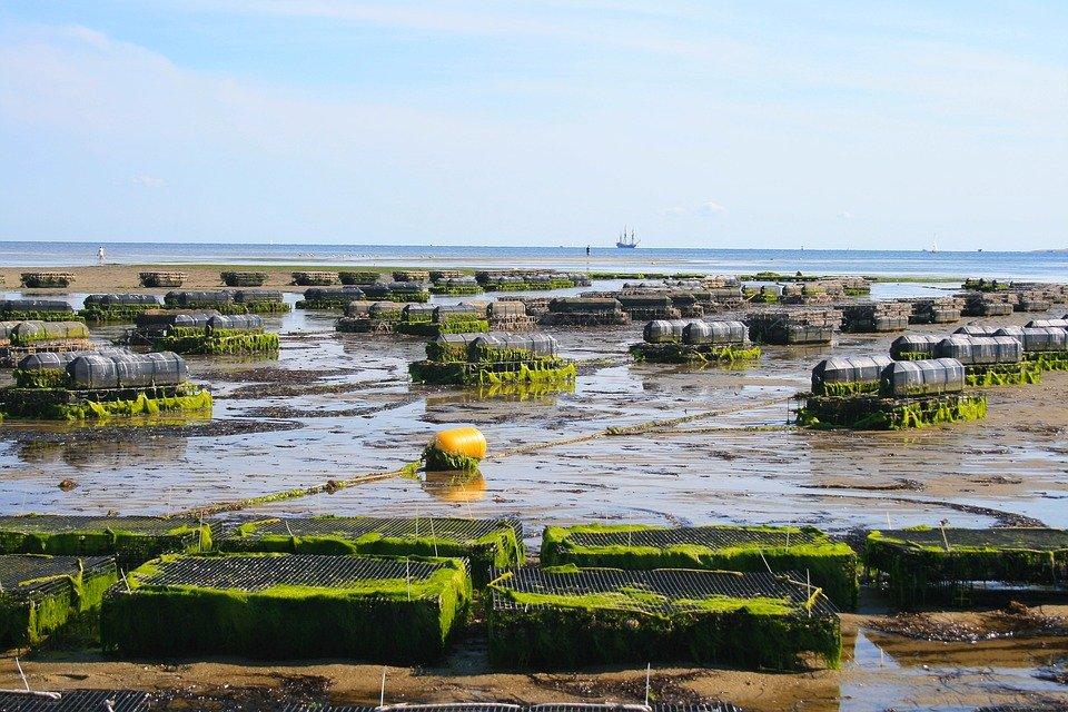 Grantly - Spodbujanje ekološkega kmetovanja in ekološkega ribogojstva v Evropi