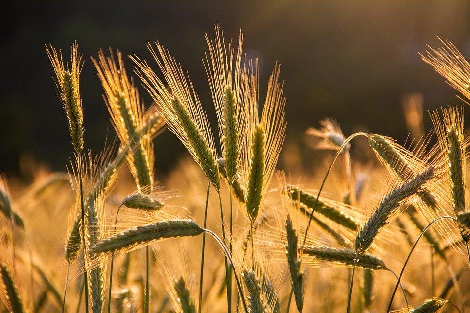 Grantly - Podpora za naložbe v kmetijska gospodarstva za leto 2021 (18)