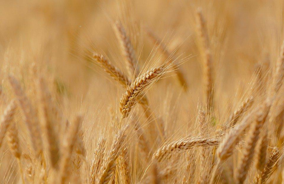 Grantly - Podpora za naložbe v kmetijska gospodarstva za leto 2021 (19)