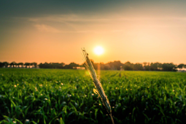 Grantly - Odprava zaraščanja na kmetijskih zemljiščih