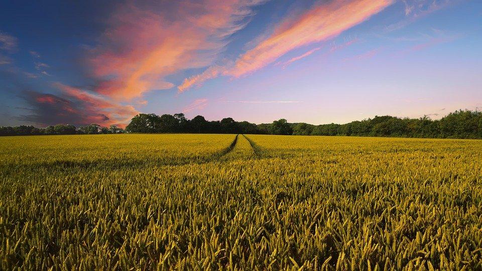 Grantly - Podpora za naložbe v izvedbo agromelioracij na komasacijskih območjih