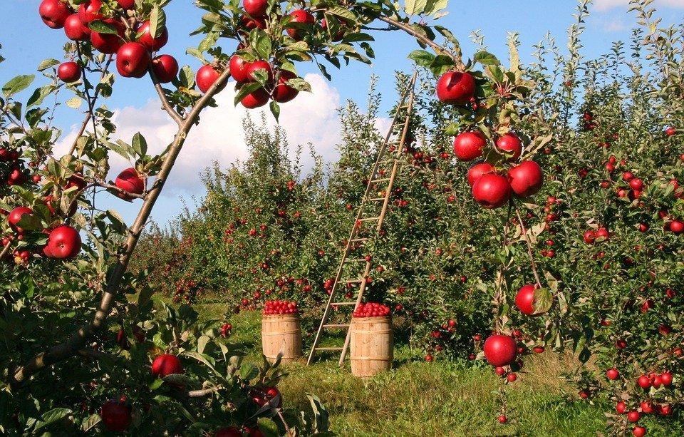 Grantly - Pomoč eko kmetijam v Občini Slovenj Gradec