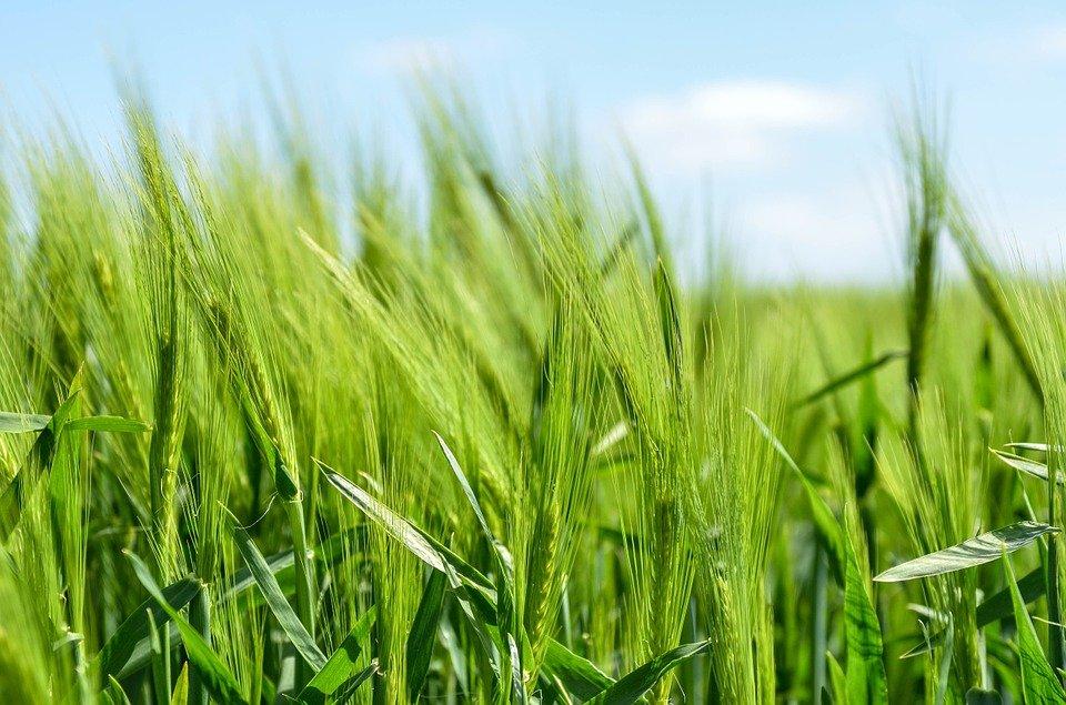 Grantly - Sofinanciranje programov s področja kmetijstva in podeželja v Občini Nova Gorica