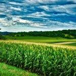 Aktualni razpisi s področja podeželja