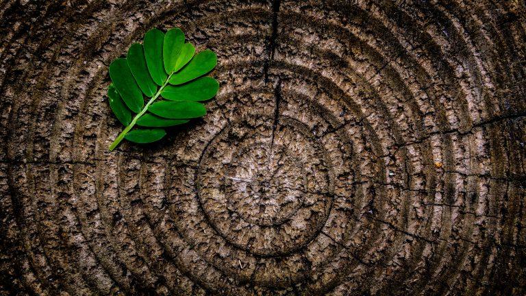Aktualni razpisi s področja podeželja: naložbe za kmetijski in gozdarski sektor